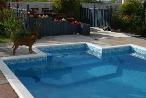 pool refurb (79)